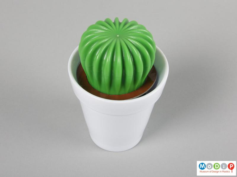 Top view of a washing up brush showing the pot and cactus handle.