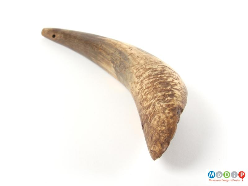 Side view of a drenching horn showing the tooth marks.