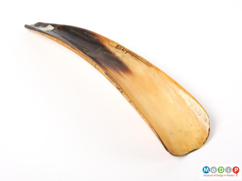 Underside view of a shoe horn showing the smooth surface.