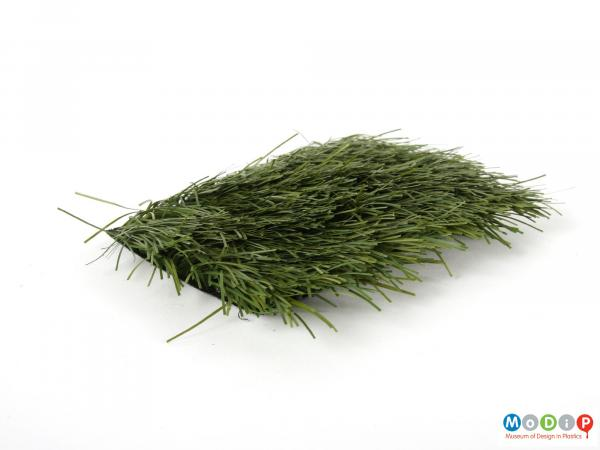 Side view of a grass sample showing the length of the grass.
