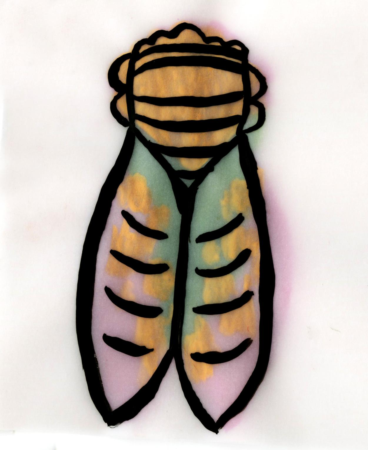 Layered cicada. Ink on layers of tracing paper.